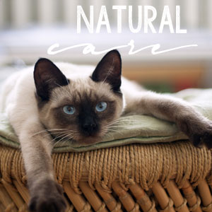Natural Care for Cats at Girl Meets Cats | girlmeetscats.com