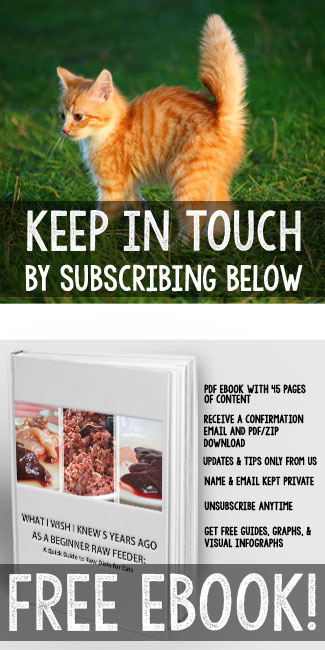 What I Wish I Knew 5 Years Ago As a Beginner Raw Feeder | FREE Girl Meets Cats eBook for our subscribers. | girlmeetscats.com